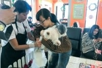 Coffee_Puppy-MCOT-4