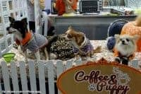 Coffee-Puppy-Gallery-21