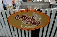 Coffee-Puppy-Gallery-32