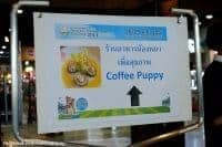 Coffee-Puppy-Gallery-67
