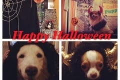 Coffee Puppy Halloween Party-03