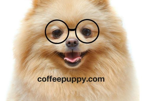 Coffee Puppy