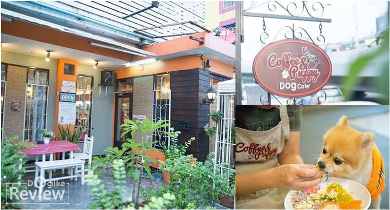 "Dog Cafe In Bangkok : DogiLike Review ""Coffee & Puppy"""