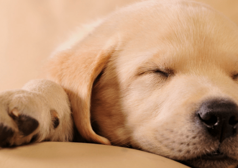 Puppy Food Guideline