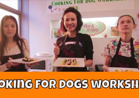 """Video """"Cooking For Dogs Workshop"""" #1 Natural, Healthy, Human-Grade"""