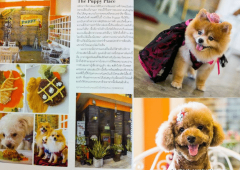"""Coffee & Puppy"" In ""Martha Stewart Living Magazine (Thailand)"""