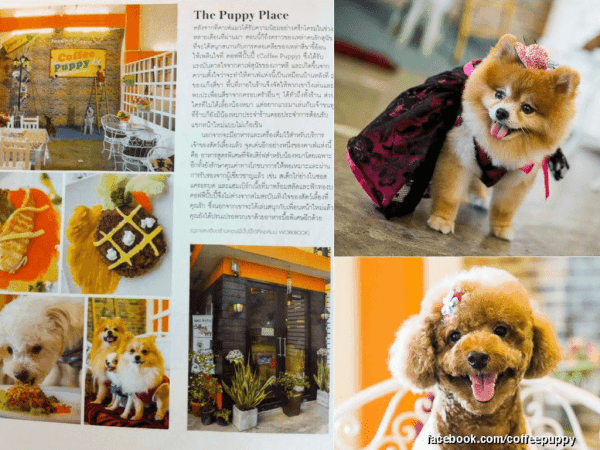 Coffee Puppy Martha Stewart Living Magazine Thailand