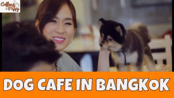 """""""Coffee & Puppy"""" On """"Toyota Drive In Love (M Channel)"""