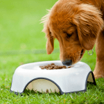 What You Don't Know About Dog Nutrition