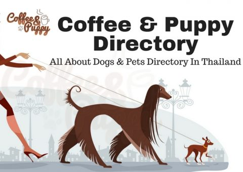"ขอแนะนำ ""Coffee & Puppy Directory"""