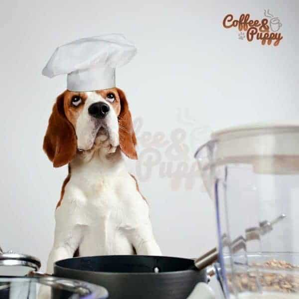 Good & Bad Food For Your Dogs