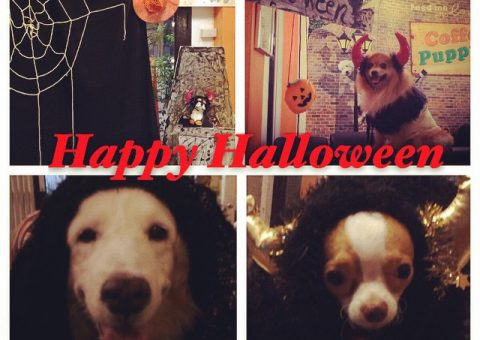 Puppy Halloween Party