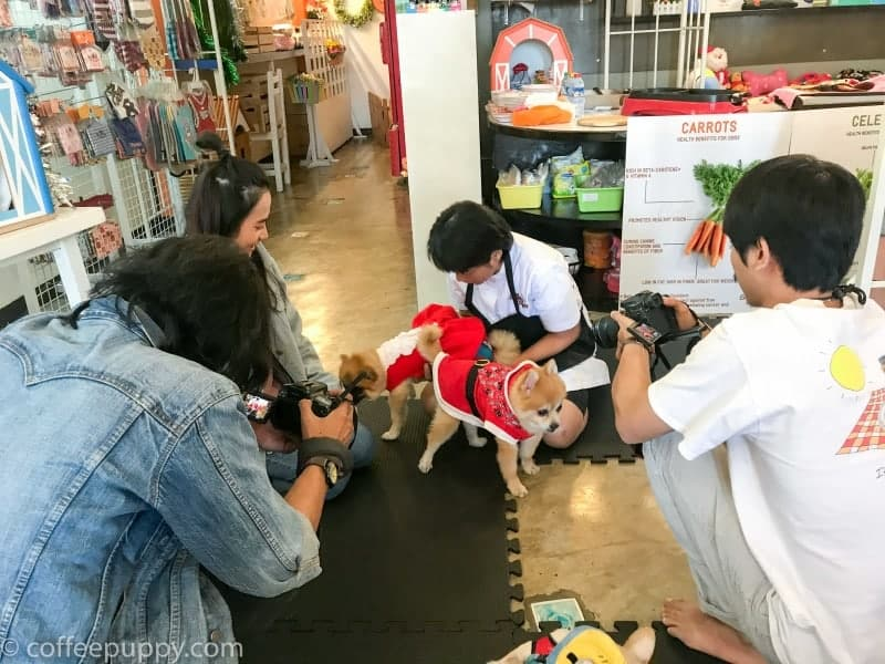 Coffee_Puppy-MCOT-3