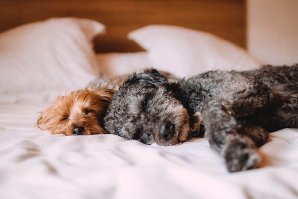 บอร์ด-รับฝากเลี้ยงน้องหมา-น้องแมว-โรงแรมน้องหมา-dog-daycare