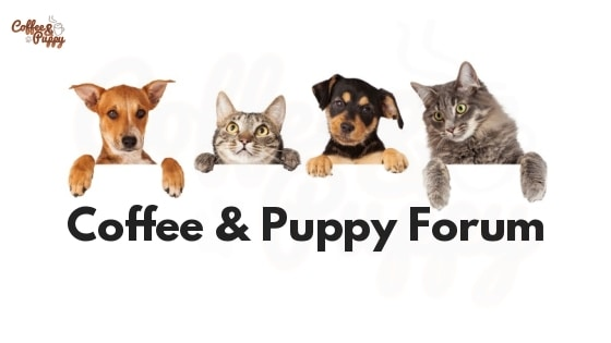 Coffee & Puppy Forum