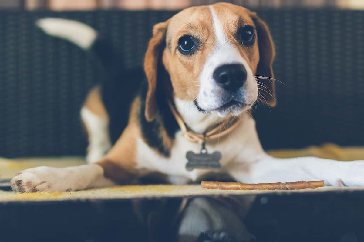 selecting-the-finest-meals-in-your-canine