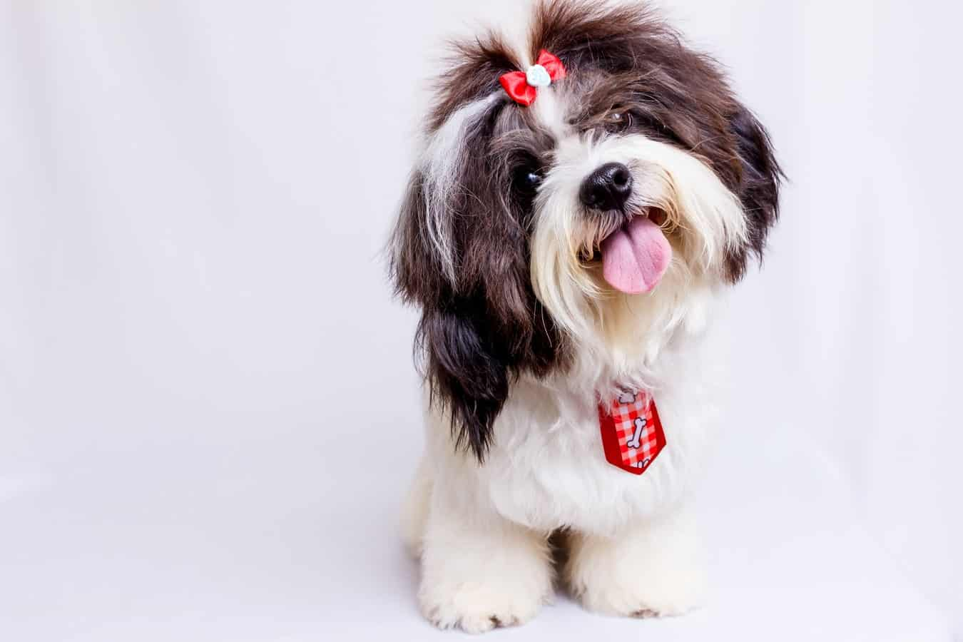 what-to-look-for-when-buying-food-for-toy-and-medium-dog-breeds