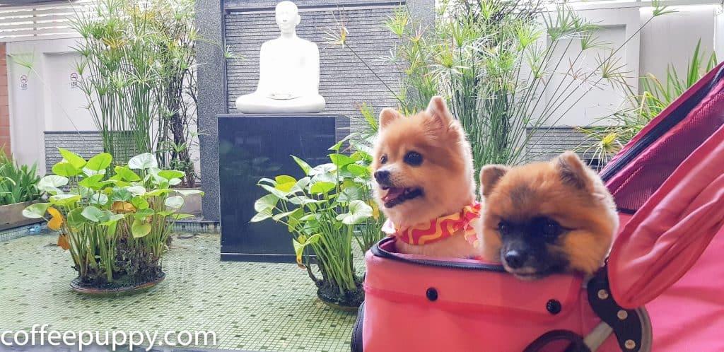 Coffee & Puppy On TV: รายการ ปากลำโพง Amarin TV HD 34 1