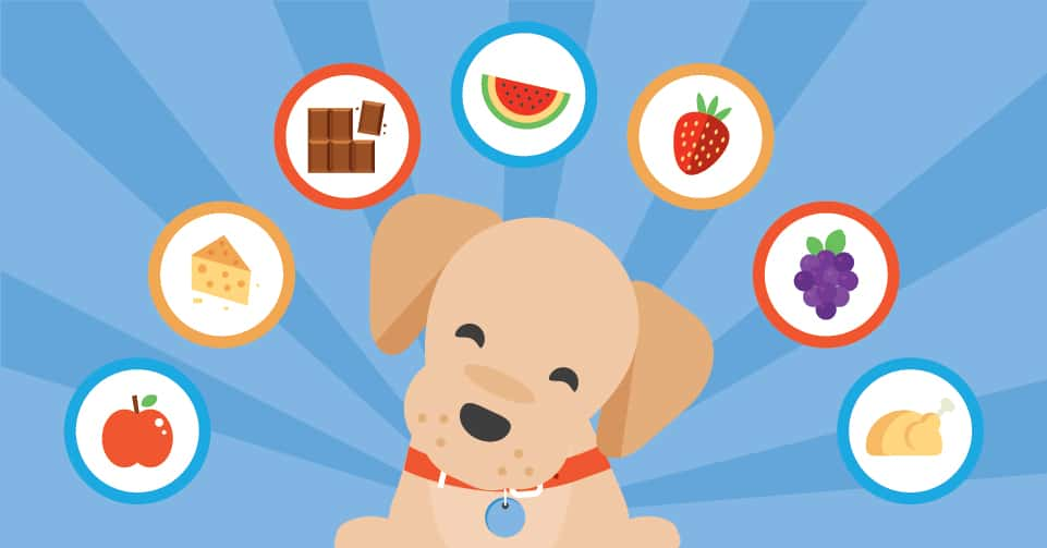 Which foods are safe for your pup to eat