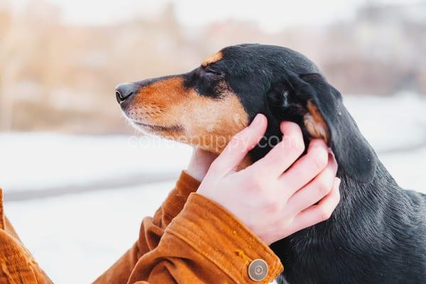 Common Dog And Cat Ear Infections