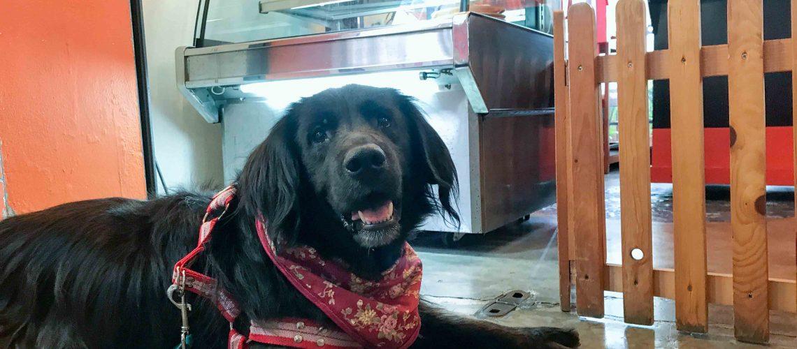 คุงข้าวตู่ จากรายการ เพื่อนตัวเล็ก (ข่าวสด) มาเที่ยวที่ร้าน Coffee & Puppy