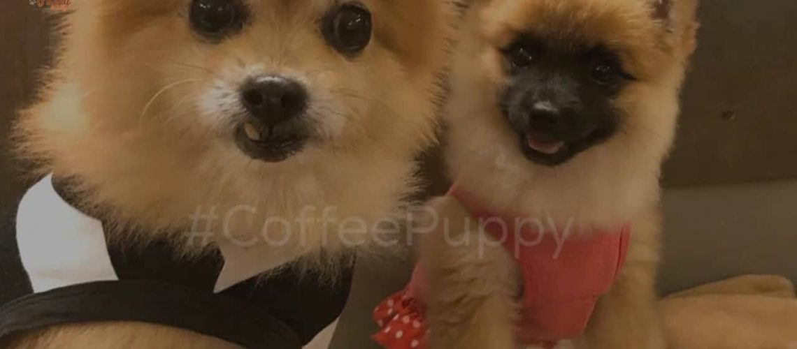 coffee-puppy-reopen