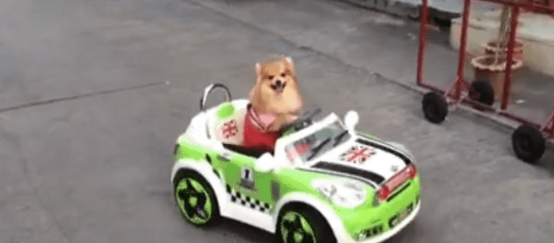 Fast & Furious (Coffee & Puppy Version)