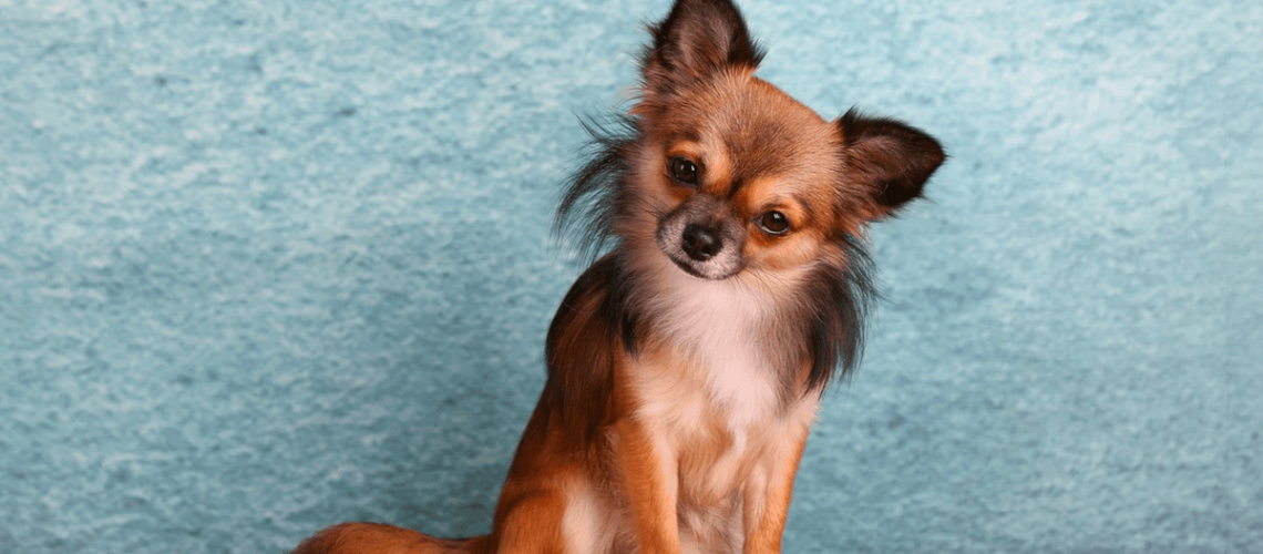 The Absolute Best Plan to Use for Dog Nutrition Balance Revealed