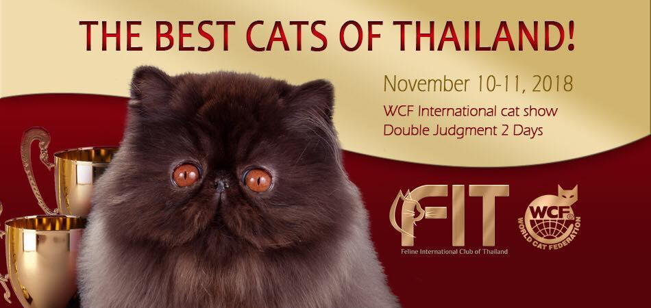 The Best Cats Of Thailand