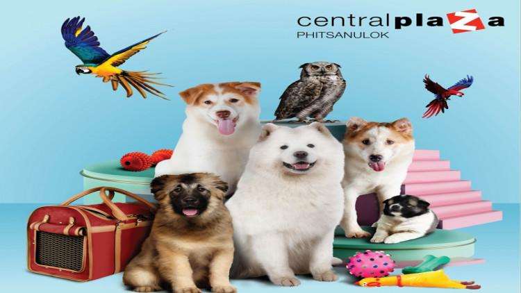 บอร์ด อีเวนท์ กิจกรรมน้องหมา งานน้องหมา งานสัตว์เลี้ยง 10
